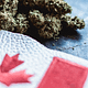 Top Weedmpas Alternative for Marijuana Dispensary Owner in Canada
